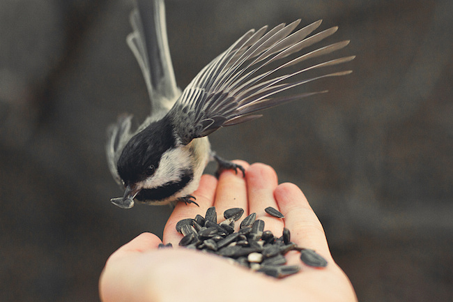 bird eating seeds out of a person's hand