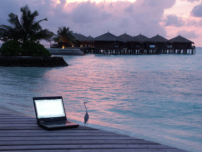 Image of a deck overlooking the ocean near some tiki huts, with a pelican standing near a laptop that lays on the deck