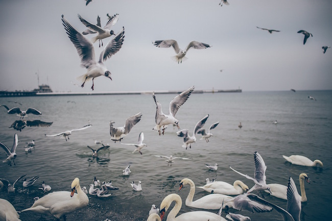 seagulls landing on shore by Patryk Sobczak