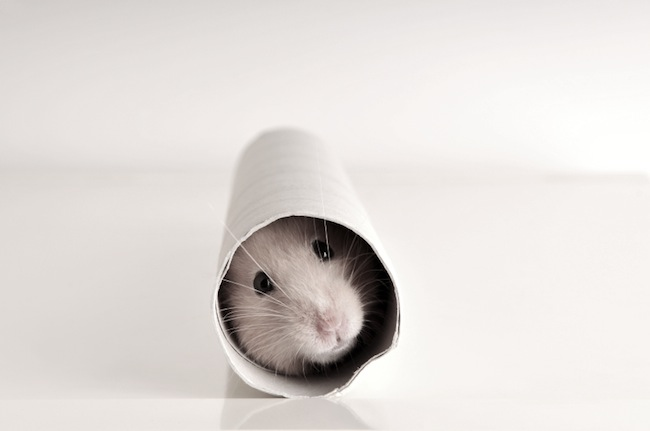 Is Content Marketing a Hamster Wheel You Can't Escape?