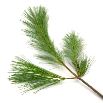 Get an Evergreen for Your Blog This Holiday Season
