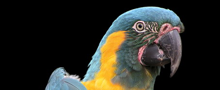 Conversations with Parrots and the Dangers of a Swipe File