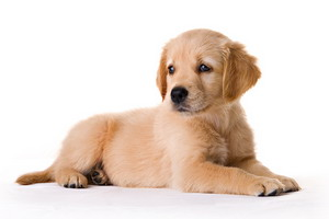 3 Writing Lessons I Learned in Dog Obedience School