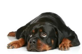 image of sad dog