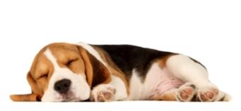 image of sleeping puppy
