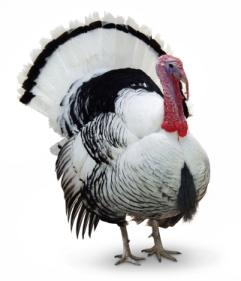 The Copyblogger Gratitude List — Happy Thanksgiving!