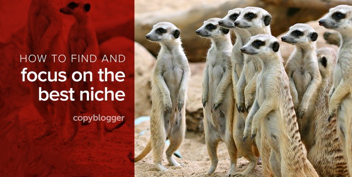 How to find and focus on the best niche